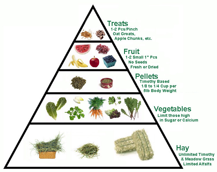 The Role of Minerals in Your Diet