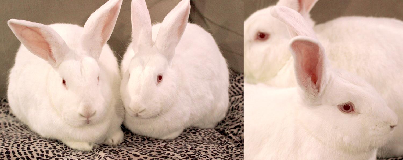 PD-Bunnies