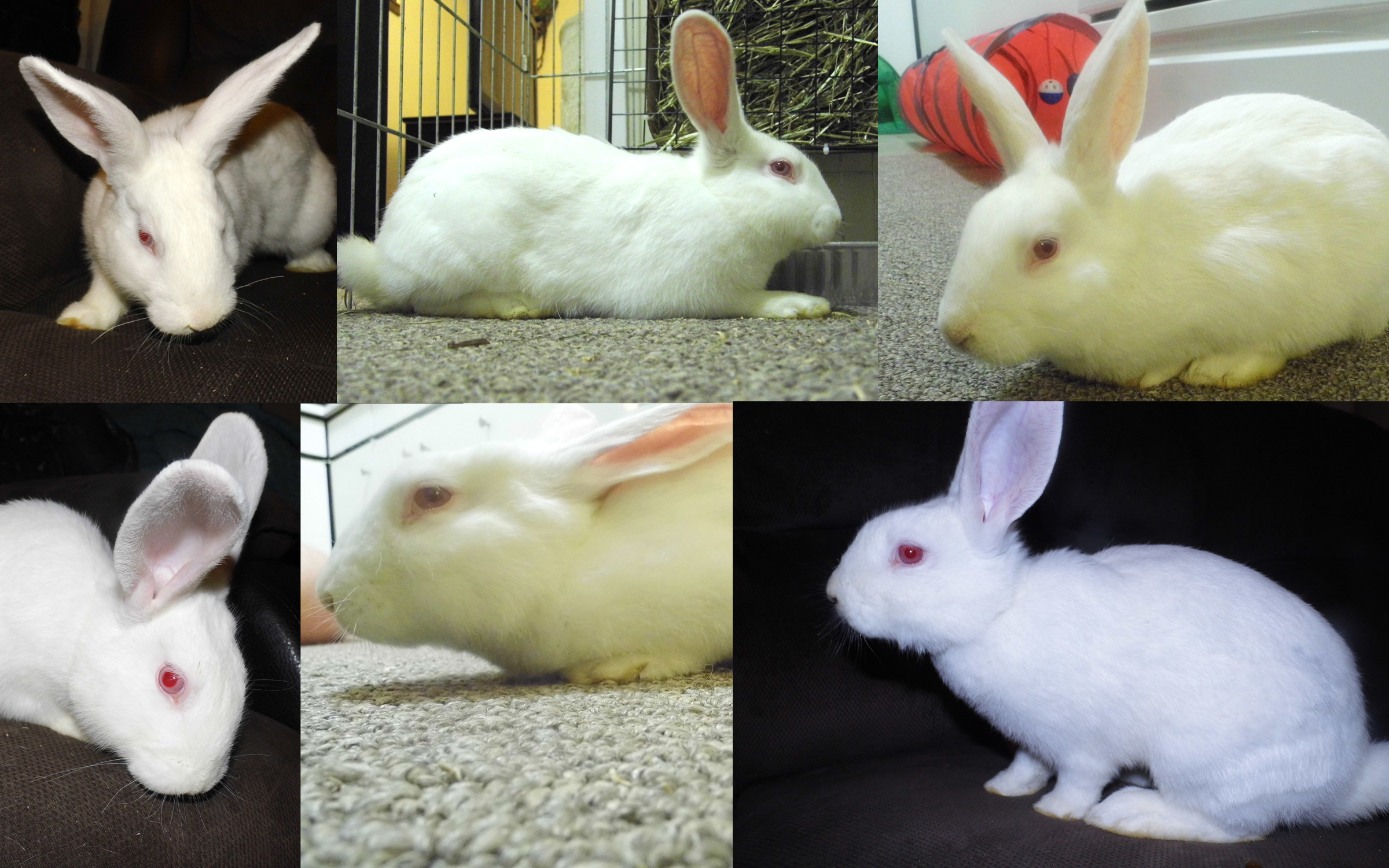 MikeTheBunnyCollage
