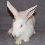 Bunny3DProfile