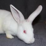 Bunny4G