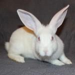 Bunny9C