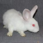 Bunny9EProfile
