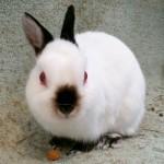BunnyBoyPROFILE