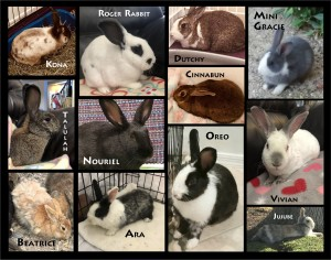 12 bun collage