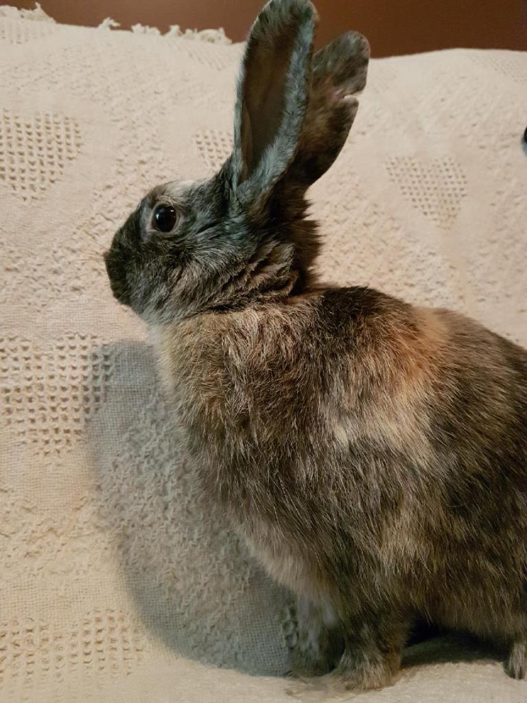 Alicia Riley Rabbit Rescue Page 2