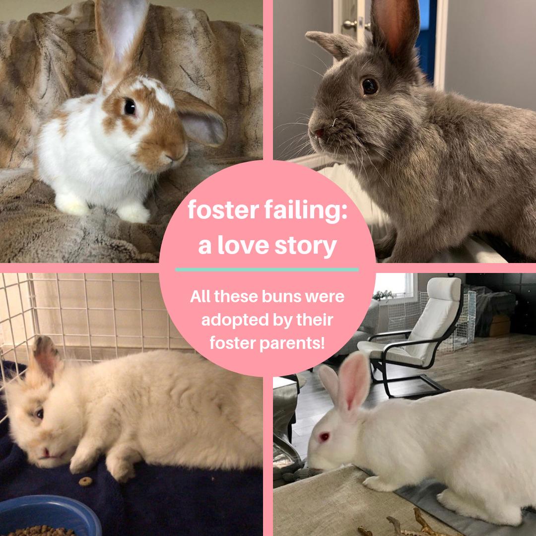 Rabbit Rescue | Providing homes for Ontario's rabbits… One