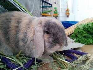 Rabbits | Rabbit Rescue
